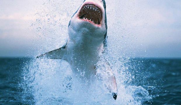 Grande squalo nello stretto di Messina il 29 agosto 2013