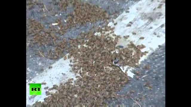 Milioni di api sciamavano su un'autostrada in Cina
