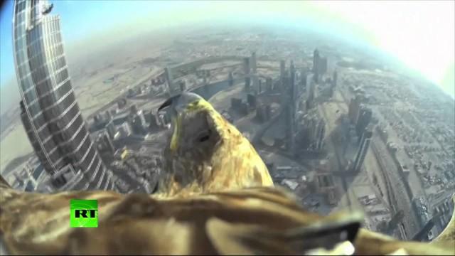 Il meraviglioso volo dell'aquila