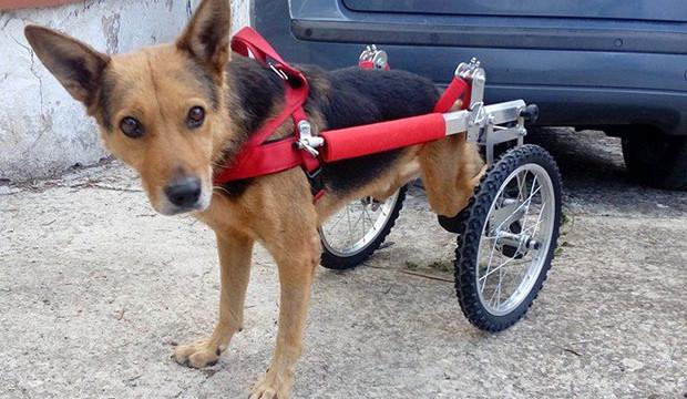 Andria: La storia di Girotondo il cane disabile