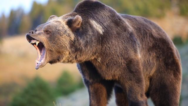 Sparò al grizzly che stava sbranando sua moglie, uccidendo entrambi