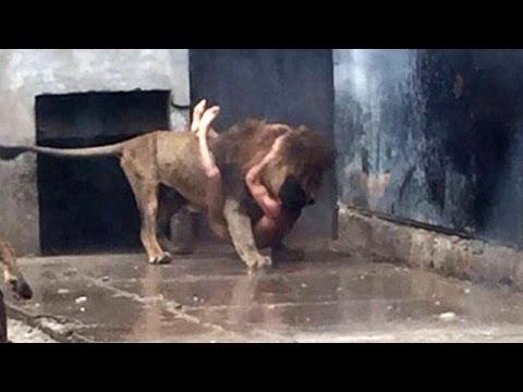 CILE: uomo nudo tenta il suicidio buttandosi nella gabbia dei leoni dello zoo di Santiago
