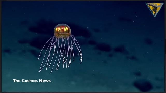"Scoperta creatura marina simile ad un ""alien"""