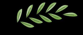 Il lutto dell'ulivo