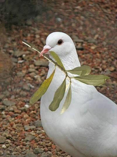 Il ramoscello della Pace