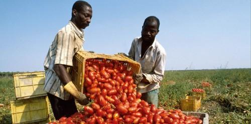Pomodori rosso sangue