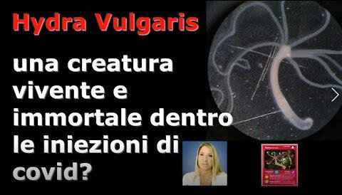 Hydra Vulgaris: una creatura vivente e immortale dentro le vaccinazioni anticovid?